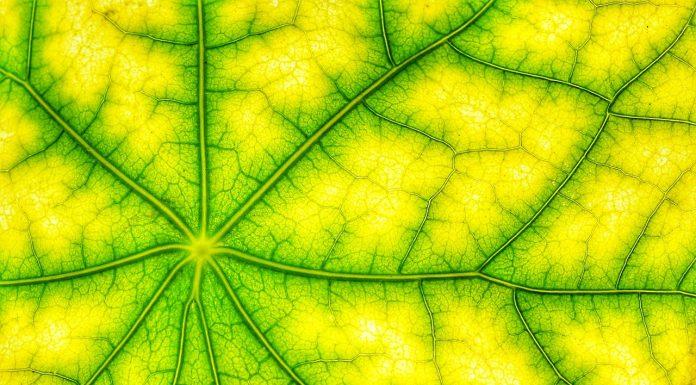 La-fotosintesi-clorofilliana