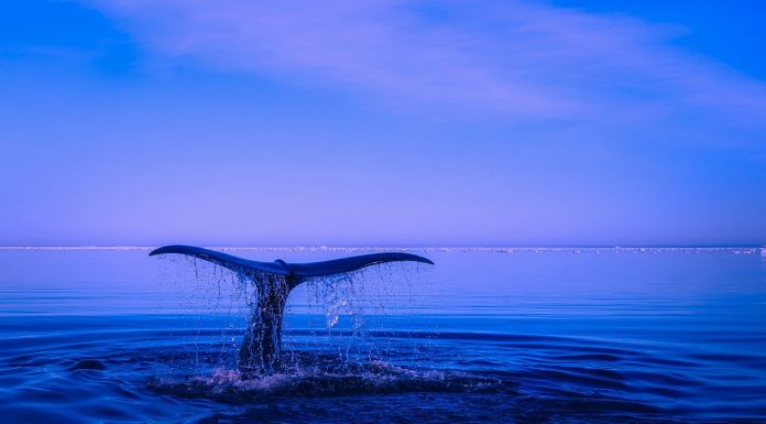 Perchè-il-mare-è-blu
